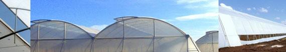 invernadero multicapilla ligero ventilacion