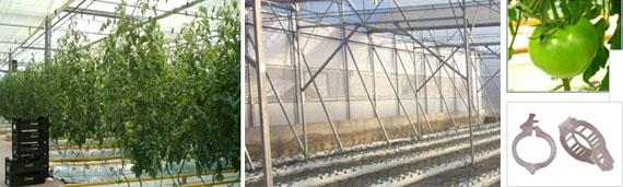 invernadero multicapilla romanico lineas cultivo
